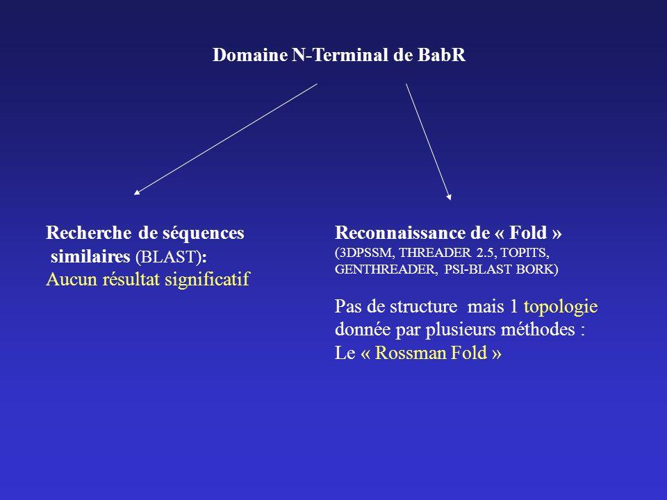 Domaine N-Terminal de BabR Recherche de séquences similaires (BLAST): Aucun résultat significatif Reconnaissance de « Fold » (3DPSSM, THREADER 2.5, TOPITS, GENTHREADER, PSI-BLAST BORK) Pas de structure mais 1 topologie donnée par plusieurs méthodes : Le « Rossman Fold »