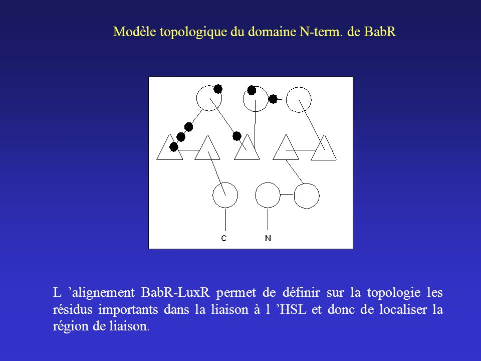 Modèle topologique du domaine N-term.