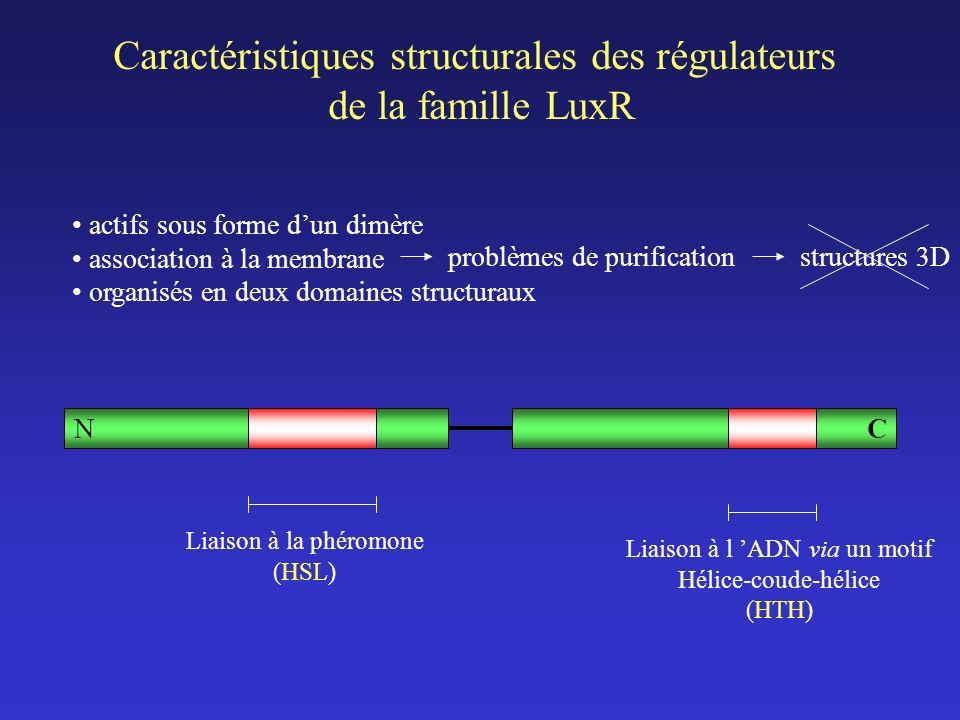 Caractéristiques structurales des régulateurs de la famille LuxR actifs sous forme dun dimère association à la membrane organisés en deux domaines structuraux NC Liaison à la phéromone (HSL) Liaison à l ADN via un motif Hélice-coude-hélice (HTH) problèmes de purificationstructures 3D