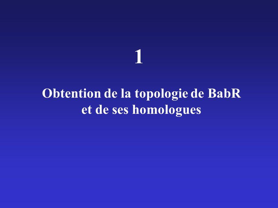 Obtention de la topologie de BabR et de ses homologues 1