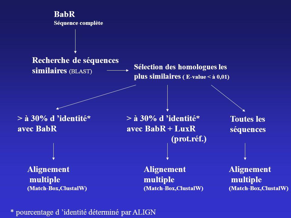 BabR Séquence complète Recherche de séquences similaires (BLAST) Sélection des homologues les plus similaires ( E-value < à 0,01) > à 30% d identité* avec BabR > à 30% d identité* avec BabR + LuxR (prot.réf.) Alignement multiple (Match-Box,ClustalW) * pourcentage d identité déterminé par ALIGN Alignement multiple (Match-Box,ClustalW) Alignement multiple (Match-Box,ClustalW) Toutes les séquences