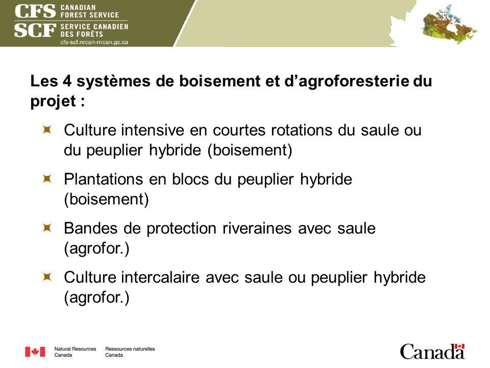 Les 4 systèmes de boisement et dagroforesterie du projet : Culture intensive en courtes rotations du saule ou du peuplier hybride (boisement) Plantati