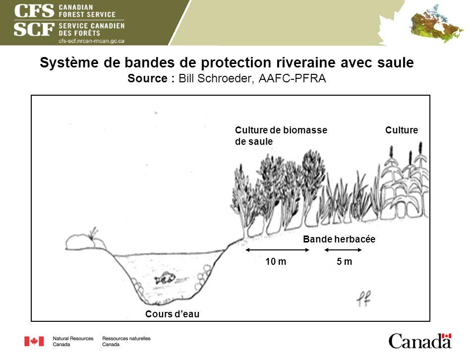Système de bandes de protection riveraine avec saule Source : Bill Schroeder, AAFC-PFRA Culture de biomasse de saule 10 m5 m Cours deau Bande herbacée