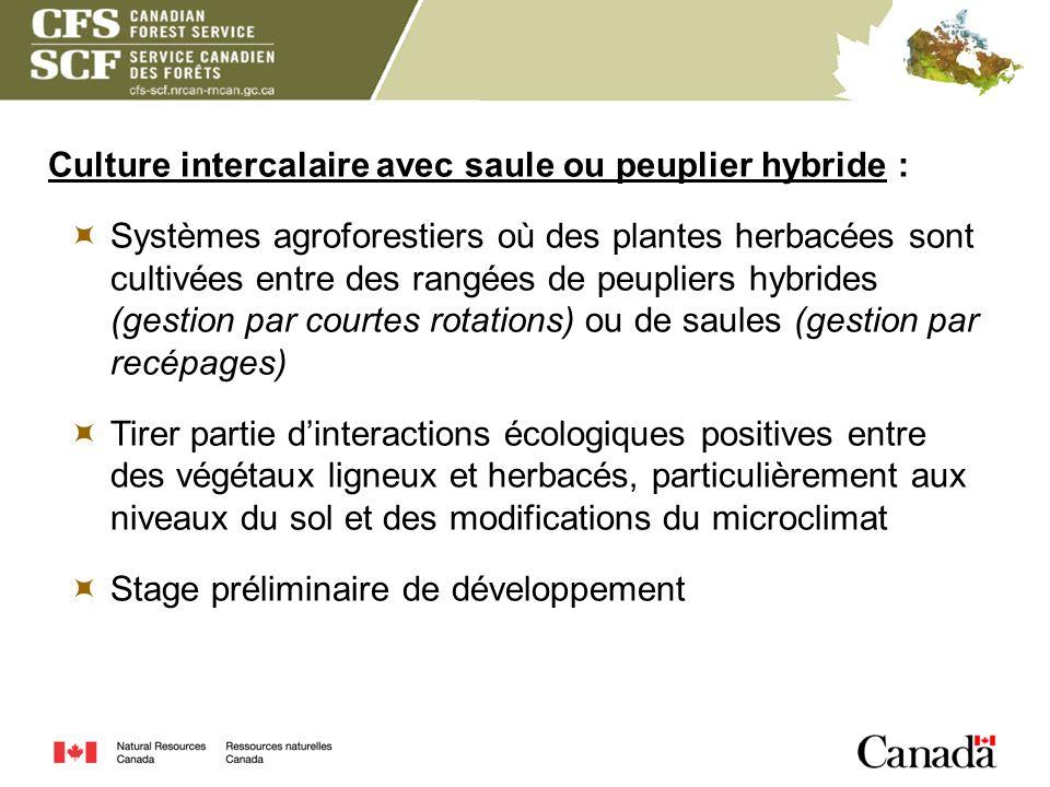 Culture intercalaire avec saule ou peuplier hybride : Systèmes agroforestiers où des plantes herbacées sont cultivées entre des rangées de peupliers h