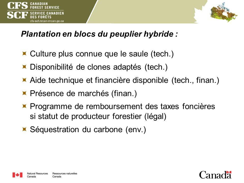 Plantation en blocs du peuplier hybride : Culture plus connue que le saule (tech.) Disponibilité de clones adaptés (tech.) Aide technique et financièr