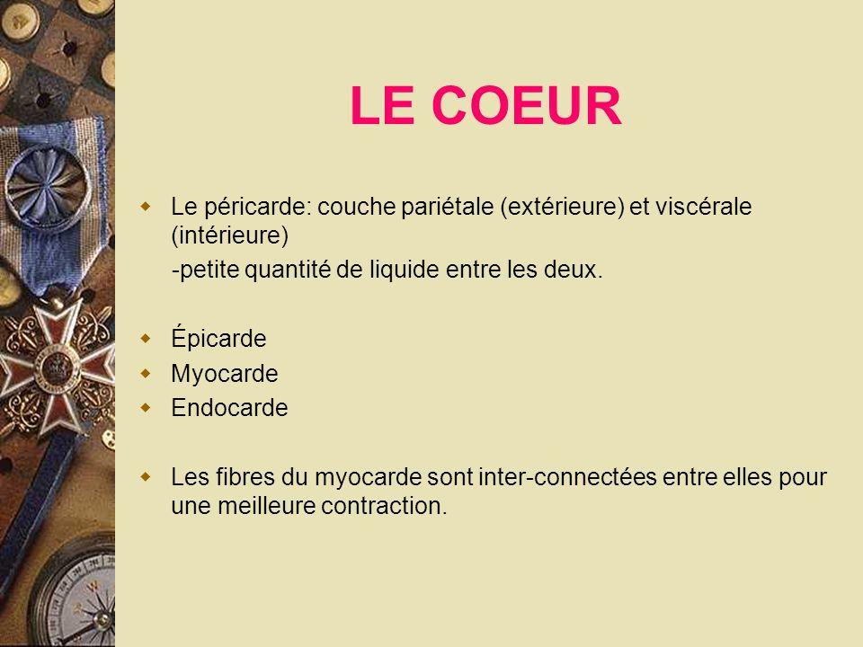 LE COEUR Le péricarde: couche pariétale (extérieure) et viscérale (intérieure) -petite quantité de liquide entre les deux. Épicarde Myocarde Endocarde