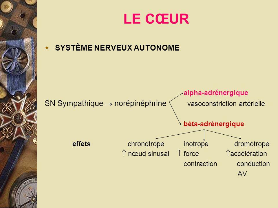 LE CŒUR SYSTÈME NERVEUX AUTONOME alpha-adrénergique SN Sympathique norépinéphrine vasoconstriction artérielle béta-adrénergique effets chronotrope ino