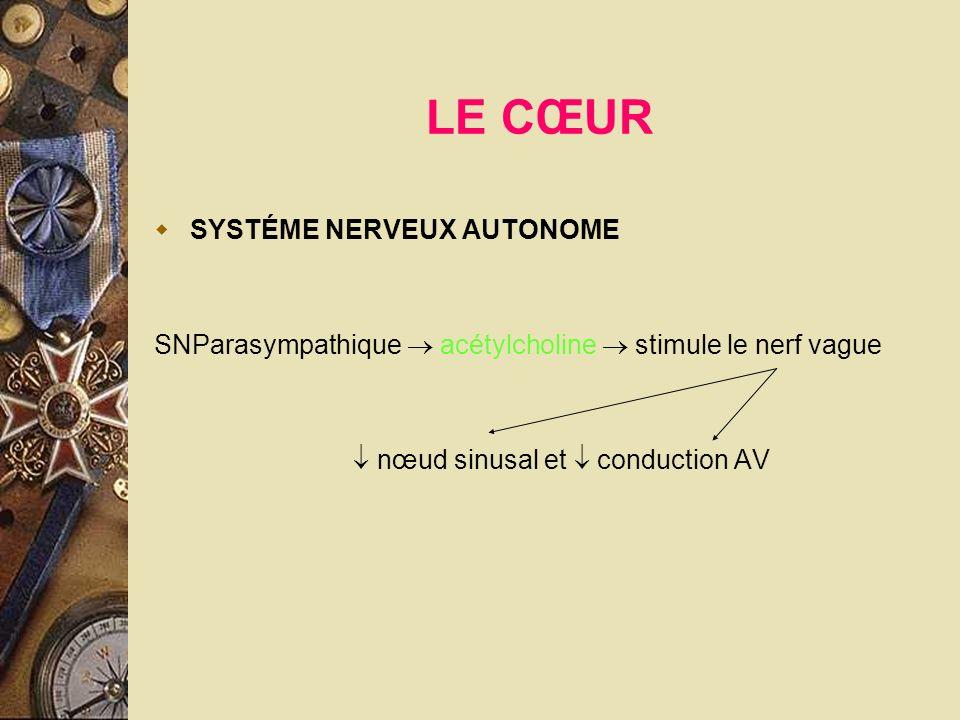 LE CŒUR SYSTÉME NERVEUX AUTONOME SNParasympathique acétylcholine stimule le nerf vague nœud sinusal et conduction AV