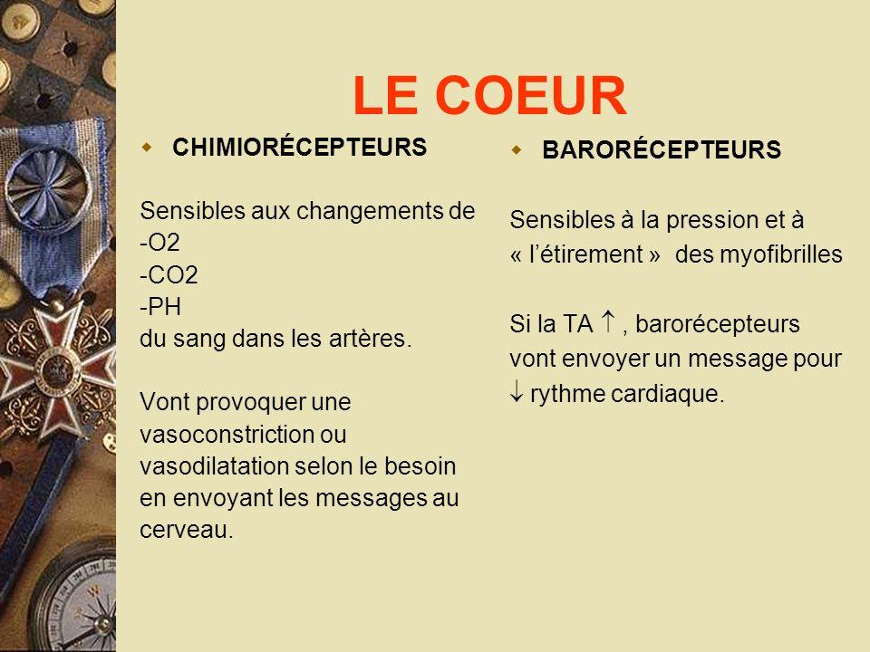 LE COEUR CHIMIORÉCEPTEURS Sensibles aux changements de -O2 -CO2 -PH du sang dans les artères. Vont provoquer une vasoconstriction ou vasodilatation se