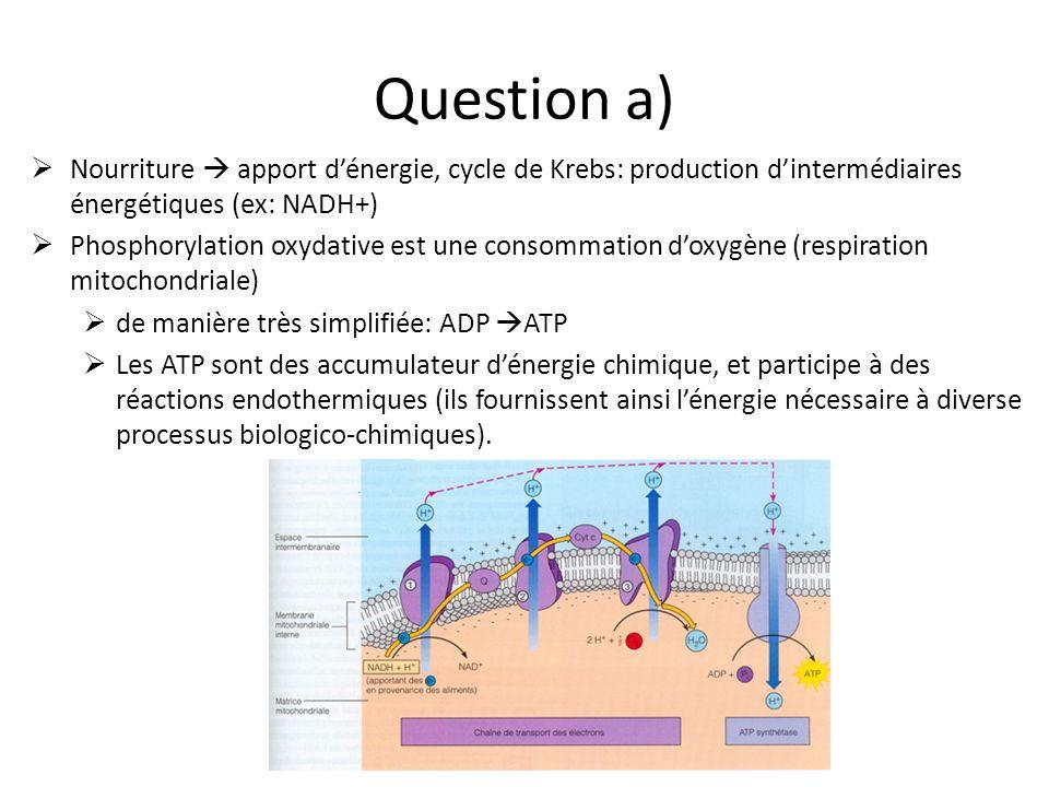 Question e) Car il y a une thermogenèse résiduelle ainsi quun métabolisme de base minimal qui persistent.