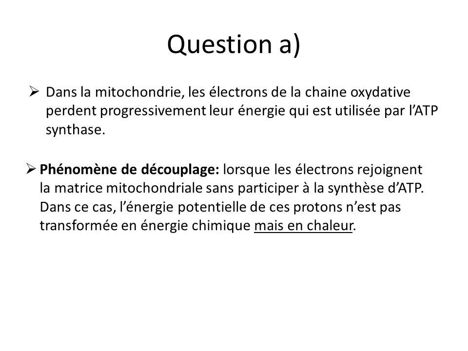 Question a) Dans la mitochondrie, les électrons de la chaine oxydative perdent progressivement leur énergie qui est utilisée par lATP synthase.