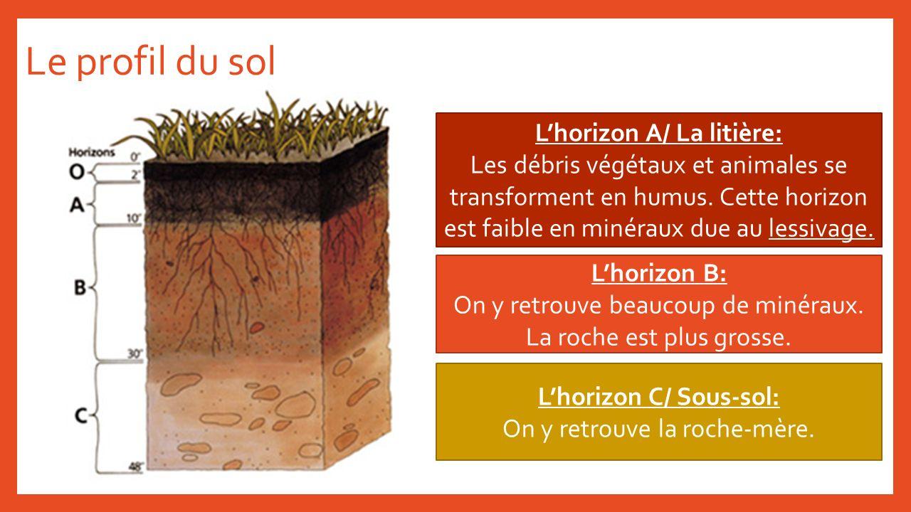 Le profil du sol Lhorizon A/ La litière: Les débris végétaux et animales se transforment en humus. Cette horizon est faible en minéraux due au lessiva