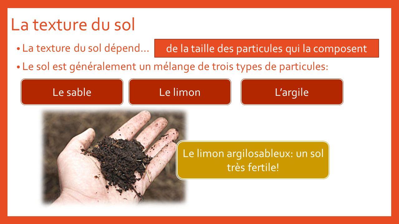 La texture du sol La texture du sol dépend… Le sol est généralement un mélange de trois types de particules: de la taille des particules qui la compos