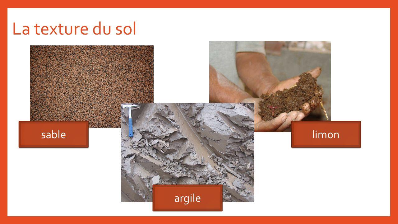 La texture du sol sable limon argile