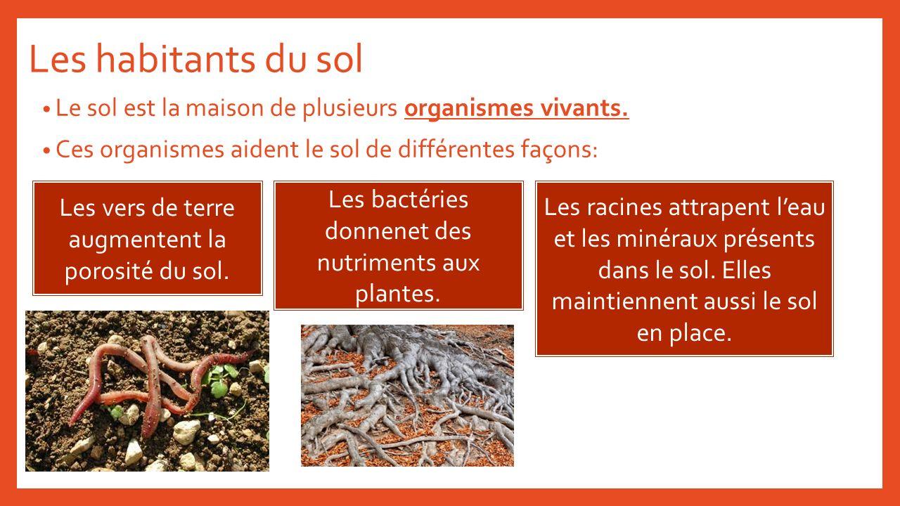 Les habitants du sol Le sol est la maison de plusieurs organismes vivants. Ces organismes aident le sol de différentes façons: Les vers de terre augme