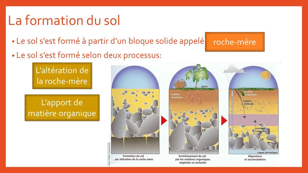 La formation du sol Le sol sest formé à partir dun bloque solide appelé Le sol sest formé selon deux processus: roche-mère Laltération de la roche-mèr