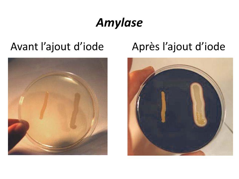 Amylase Avant lajout diodeAprès lajout diode
