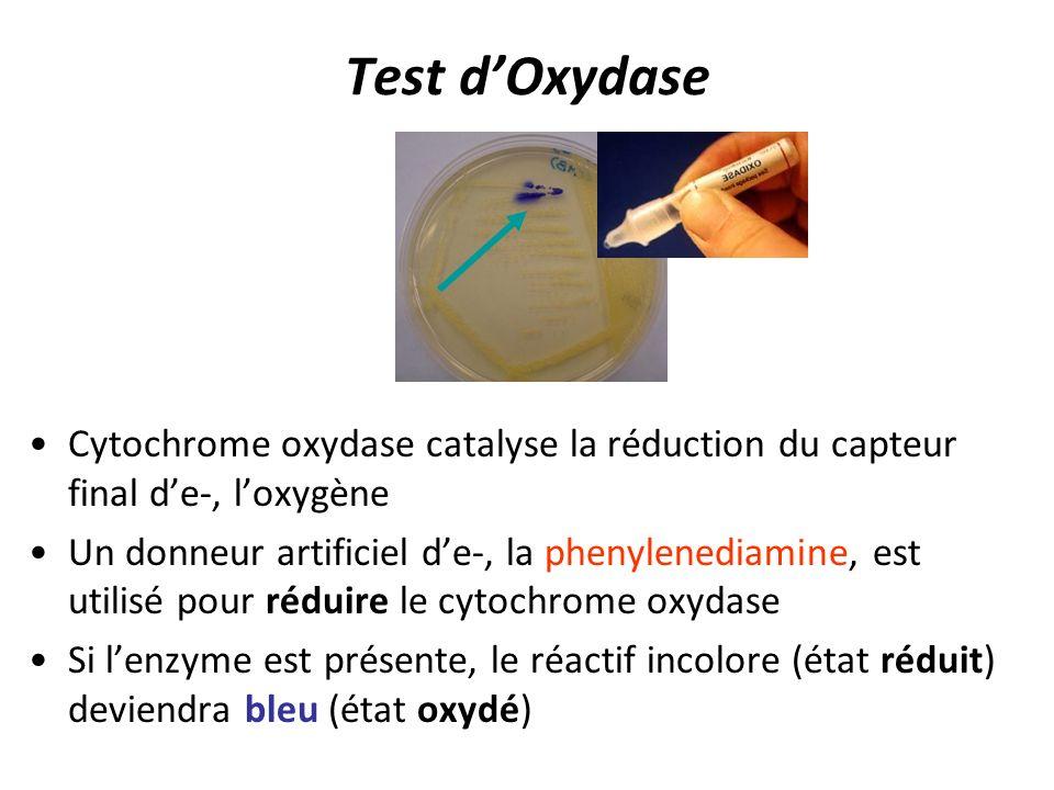 Test dOxydase Cytochrome oxydase catalyse la réduction du capteur final de-, loxygène Un donneur artificiel de-, la phenylenediamine, est utilisé pour
