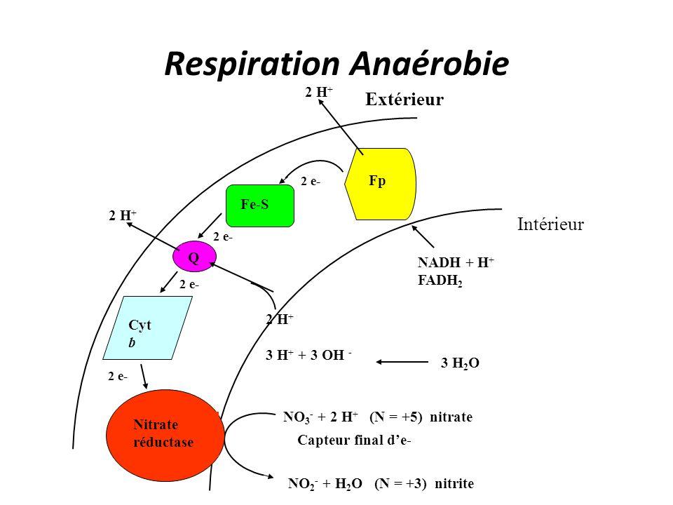 Respiration Anaérobie 2 H + 3 H + + 3 OH - 3 H 2 O 2 H + NO 2 - + H 2 O (N = +3) nitrite NO 3 - + 2 H + (N = +5) nitrate 2 e- Fp Fe-S 2 e- Q Cyt b NAD