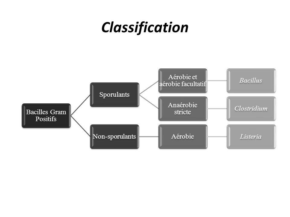 Classification Bacilles Gram Positifs Sporulants Aérobie et aérobie facultatif Bacillus Anaérobie stricte ClostridiumNon-sporulantsAérobieListeria