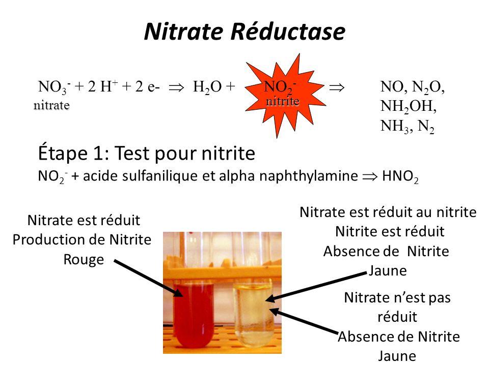 Nitrate Réductase NO 3 - + 2 H + + 2 e- H 2 O + NO 2 - NO, N 2 O, NH 2 OH, NH 3, N 2 nitrate nitrite Étape 1: Test pour nitrite NO 2 - + acide sulfani