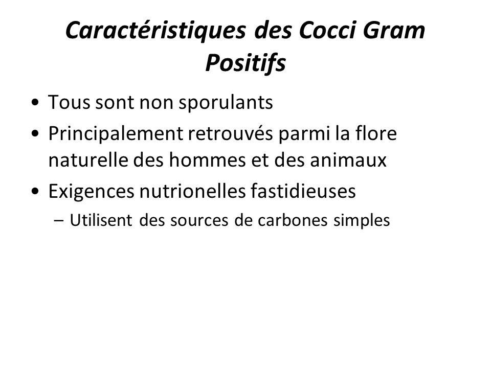 Caractéristiques des Cocci Gram Positifs Tous sont non sporulants Principalement retrouvés parmi la flore naturelle des hommes et des animaux Exigence