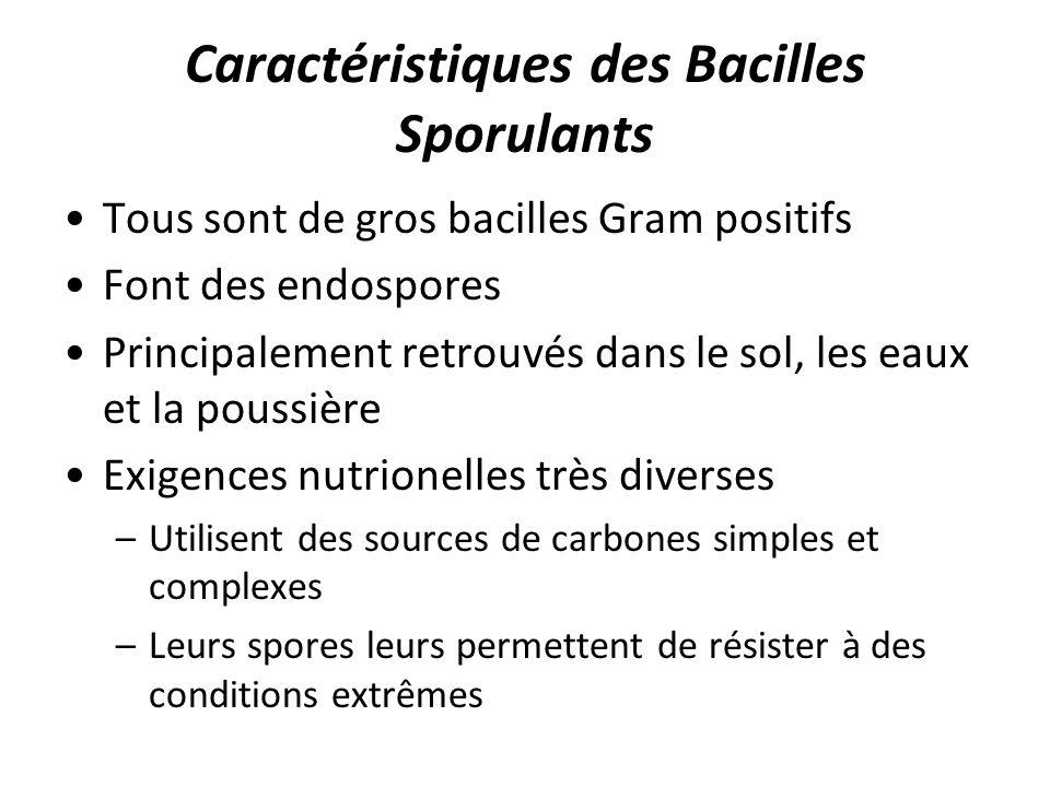 Caractéristiques des Bacilles Sporulants Tous sont de gros bacilles Gram positifs Font des endospores Principalement retrouvés dans le sol, les eaux e
