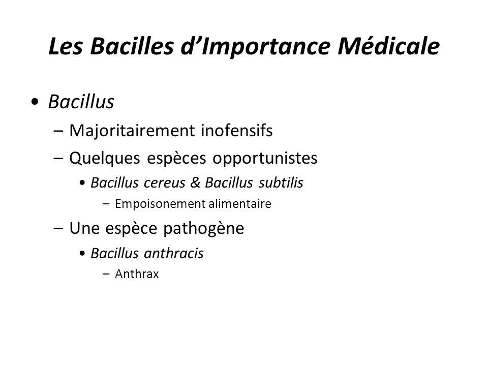 Les Bacilles dImportance Médicale Bacillus –Majoritairement inofensifs –Quelques espèces opportunistes Bacillus cereus & Bacillus subtilis –Empoisonem