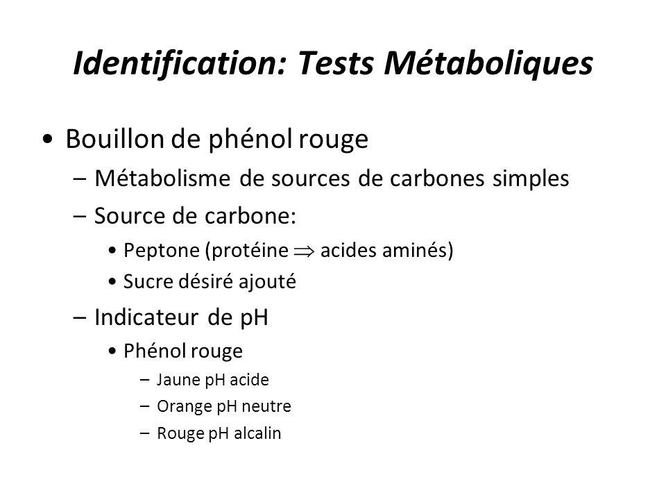 Identification: Tests Métaboliques Bouillon de phénol rouge –Métabolisme de sources de carbones simples –Source de carbone: Peptone (protéine acides a