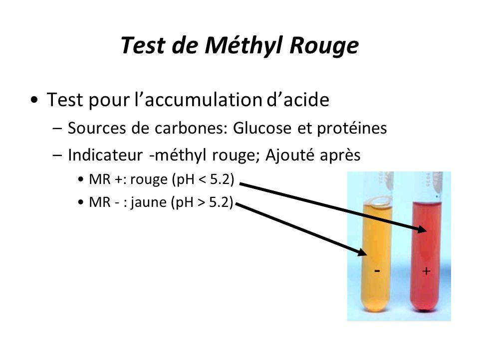 Test de Méthyl Rouge Test pour laccumulation dacide –Sources de carbones: Glucose et protéines –Indicateur -méthyl rouge; Ajouté après MR +: rouge (pH