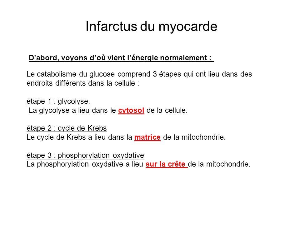 Infarctus du myocarde Le catabolisme du glucose comprend 3 étapes qui ont lieu dans des endroits différents dans la cellule : étape 1 : glycolyse. La