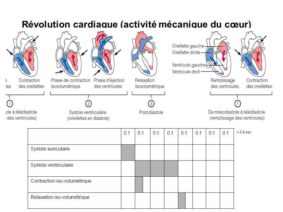 Révolution cardiaque (activité mécanique du cœur) 0.1 = 0.8 sec Systole auriculaire Systole ventriculaire Contraction iso-volumétrique Relaxation iso-