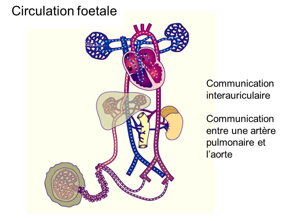 Circulation foetale Communication interauriculaire Communication entre une artère pulmonaire et laorte