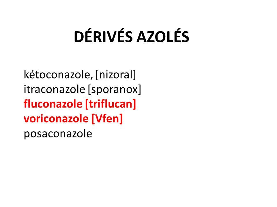 DÉRIVÉS AZOLÉS kétoconazole, [nizoral] itraconazole [sporanox] fluconazole [triflucan] voriconazole [Vfen] posaconazole