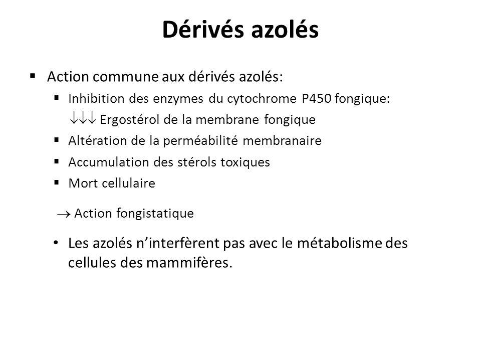Dérivés azolés Action commune aux dérivés azolés: Inhibition des enzymes du cytochrome P450 fongique: Ergostérol de la membrane fongique Altération de