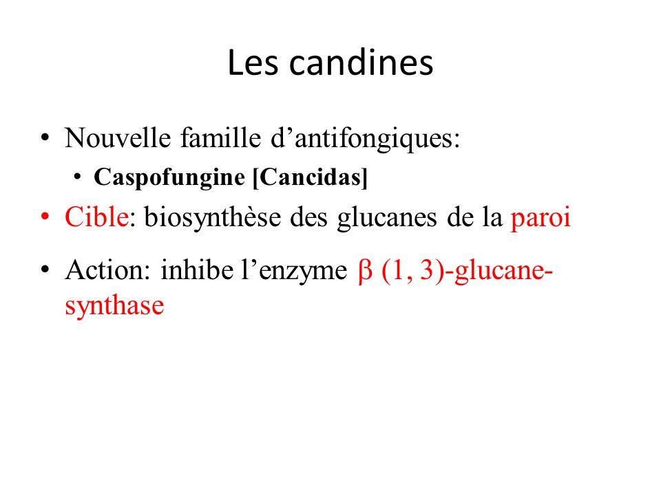 Les candines Nouvelle famille dantifongiques: Caspofungine [Cancidas] Cible: biosynthèse des glucanes de la paroi Action: inhibe lenzyme (1, 3)-glucan