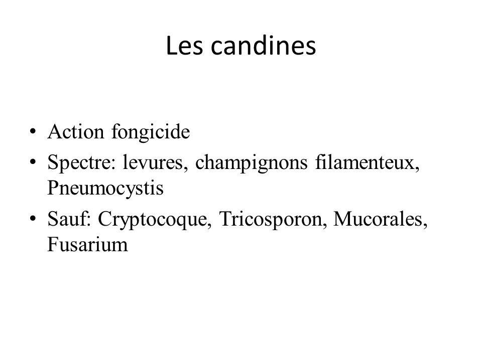 Les candines Action fongicide Spectre: levures, champignons filamenteux, Pneumocystis Sauf: Cryptocoque, Tricosporon, Mucorales, Fusarium