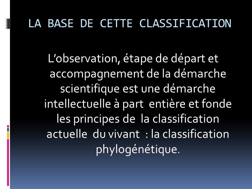 LA BASE DE CETTE CLASSIFICATION Lobservation, étape de départ et accompagnement de la démarche scientifique est une démarche intellectuelle à part ent