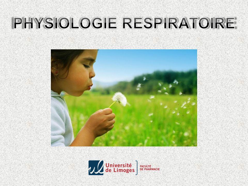 Entretien des échanges gazeux entre l organisme et le milieu ambiant apport continu d O 2 au niveau des cellules et rejet du CO 2 produit par le métabolisme aérobie Les poumonsLes alvéoles pulmonaires