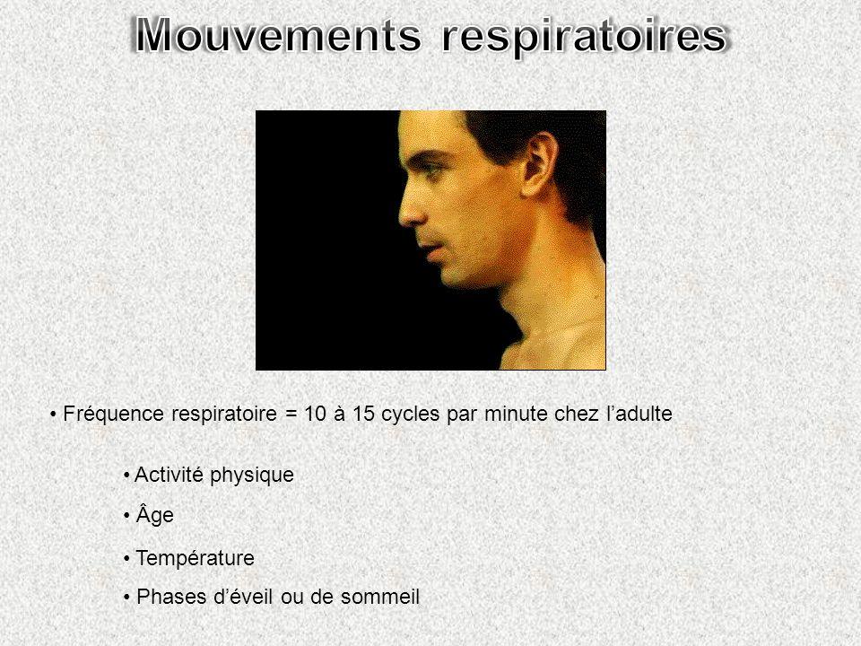 Fréquence respiratoire = 10 à 15 cycles par minute chez ladulte Activité physique Âge Température Phases déveil ou de sommeil
