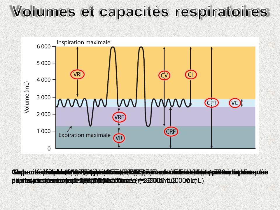 Volume courant (VC) = quantité dair qui entre ou sort des poumons au cours dun cycle respiratoire ( 500 mL) Volume de réserve inspiratoire (VRI) = vol