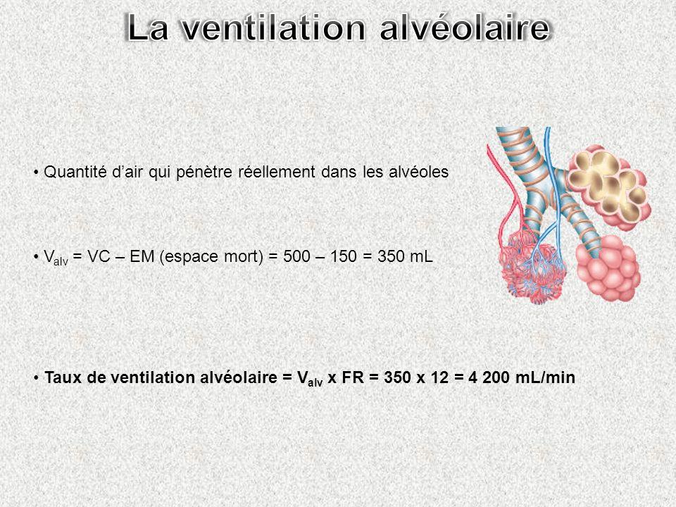 Quantité dair qui pénètre réellement dans les alvéoles V alv = VC – EM (espace mort) = 500 – 150 = 350 mL Taux de ventilation alvéolaire = V alv x FR