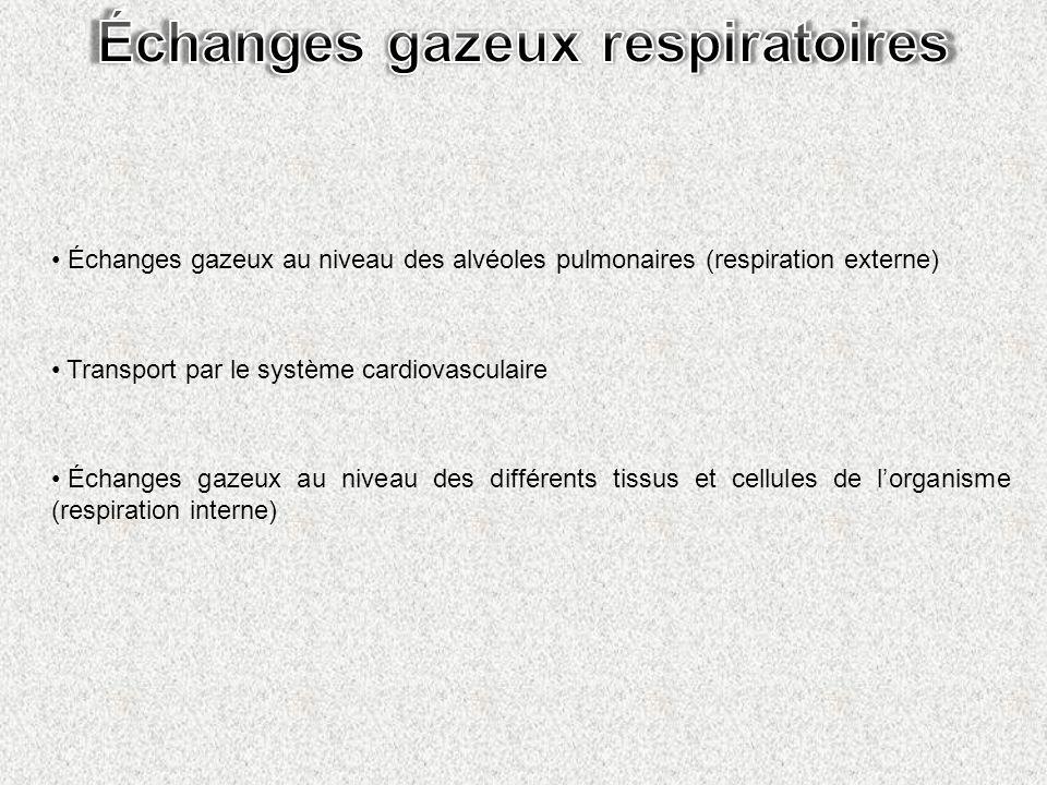 Échanges gazeux au niveau des alvéoles pulmonaires (respiration externe) Transport par le système cardiovasculaire Échanges gazeux au niveau des diffé