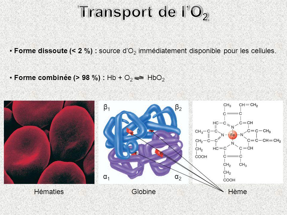 Forme dissoute (< 2 %) : source dO 2 immédiatement disponible pour les cellules. Forme combinée (> 98 %) : Hb + O 2 HbO 2 Hématies Hème Globine β1 β1