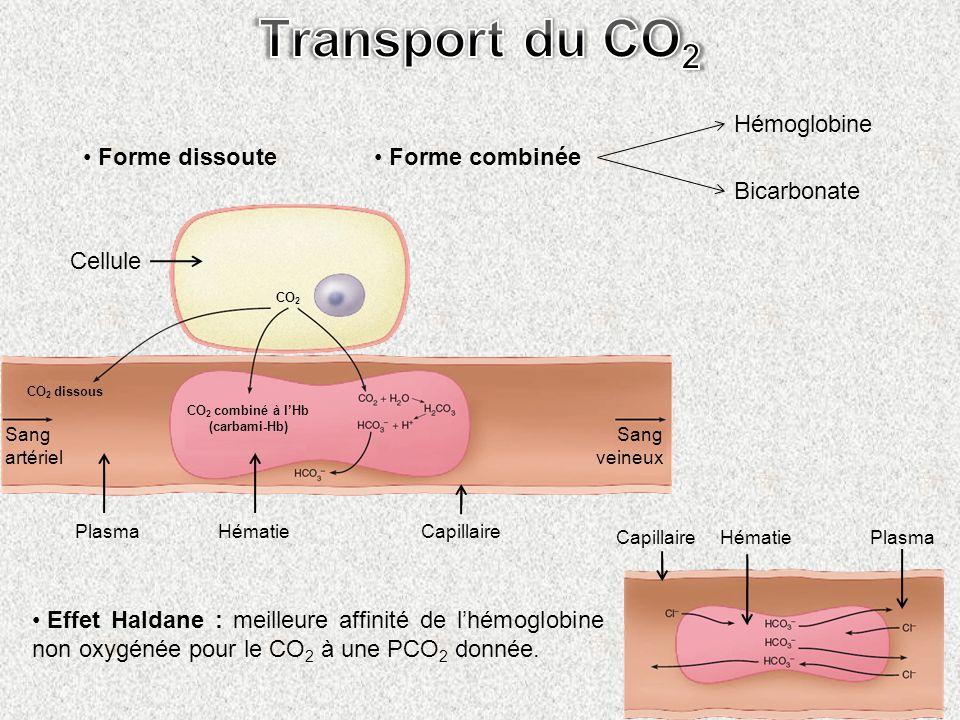 Forme dissoute Forme combinée Hémoglobine Bicarbonate Cellule CO 2 CO 2 dissous Sang artériel Sang veineux HématieCapillairePlasma CO 2 combiné à lHb