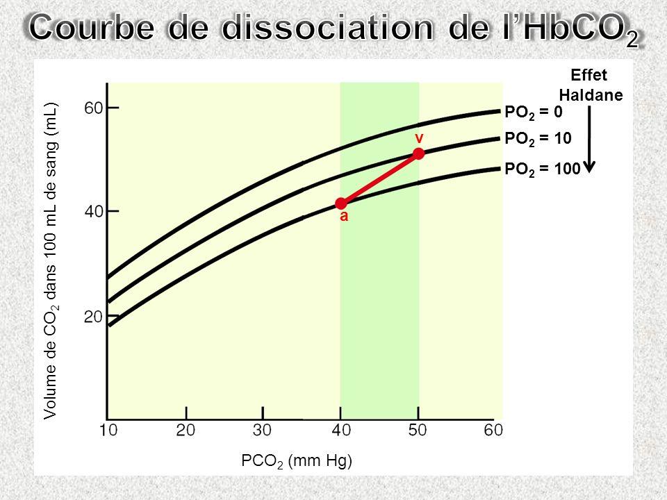 Volume de CO 2 dans 100 mL de sang (mL) PCO 2 (mm Hg) a v PO 2 = 0 PO 2 = 10 PO 2 = 100 Effet Haldane