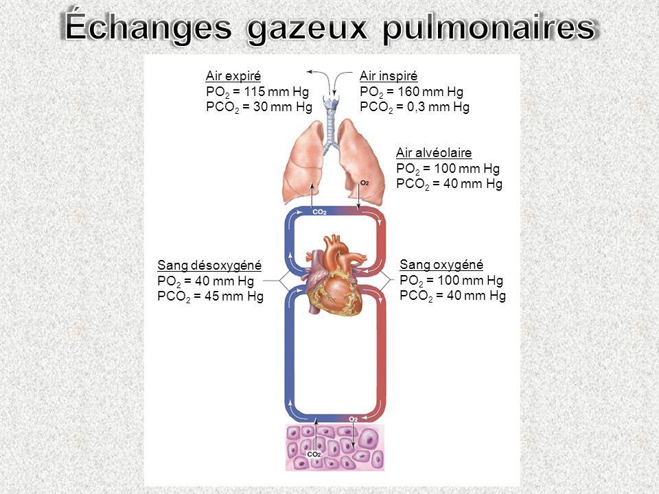 Air alvéolaire PO 2 = 100 mm Hg PCO 2 = 40 mm Hg Air inspiré PO 2 = 160 mm Hg PCO 2 = 0,3 mm Hg Air expiré PO 2 = 115 mm Hg PCO 2 = 30 mm Hg Sang déso