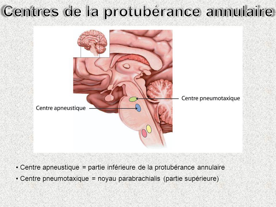 Centre apneustique = partie inférieure de la protubérance annulaire Centre pneumotaxique = noyau parabrachialis (partie supérieure)