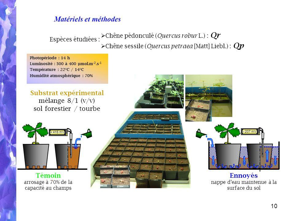 10 Photopériode : 14 h Luminosité : 300 à 400 µmol.m -2.s -1 Température : 22°C / 14°C Humidité atmosphérique : 70% Espèces étudiées : Chêne pédonculé (Quercus robur L.) : Qr Chêne sessile (Quercus petraea [Matt] Liebl.) : Qp Substrat expérimental mélange 8/1 (v/v) sol forestier / tourbe Témoin arrosage à 70% de la capacité au champs Ennoyés nappe deau maintenue à la surface du sol - 207 mV + 415 mV Matériels et méthodes