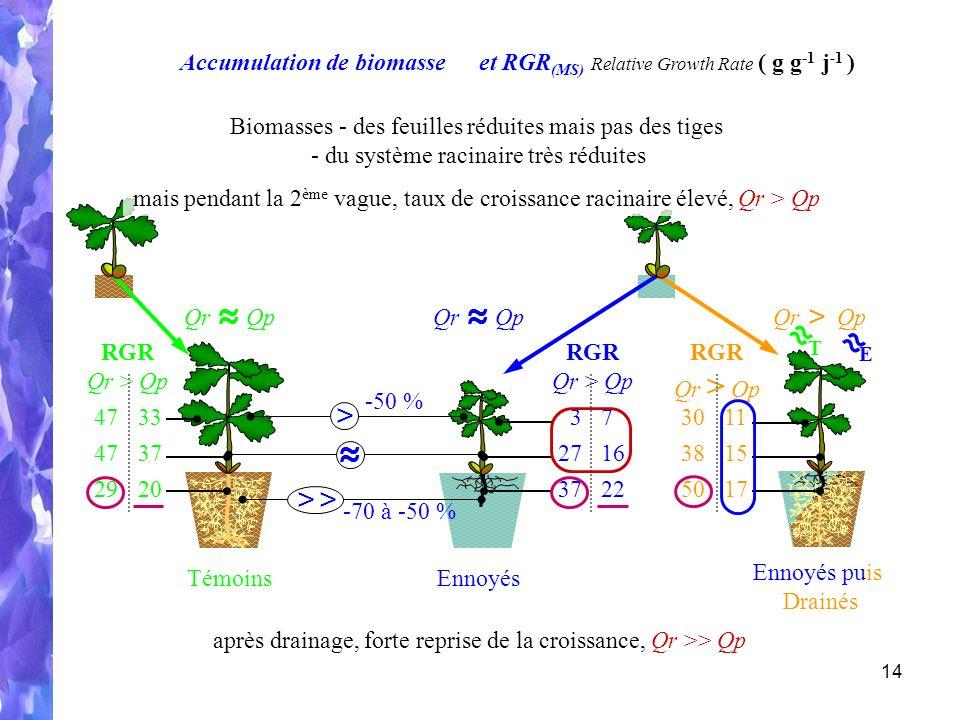 14 Ennoyés Témoins Ennoyés puis Drainés Accumulation de biomasse Qr Qp Qr > Qp -50 % > -70 à -50 % >> Qr > Qp et RGR (MS) Relative Growth Rate ( g g -1 j -1 ) E T RGR Qr > Qp 30 38 50 11 15 17 RGR Qr > Qp 3 27 37 7 16 22 RGR Qr > Qp 47 29 33 37 20 mais pendant la 2 ème vague, taux de croissance racinaire élevé, Qr > Qp après drainage, forte reprise de la croissance, Qr >> Qp Biomasses - des feuilles réduites mais pas des tiges - du système racinaire très réduites